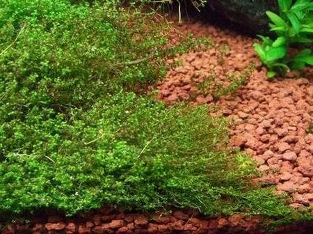 פגמים ב- צמחי אקווריום