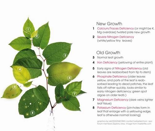 צמחי אקווריום - טבלת ליקויים
