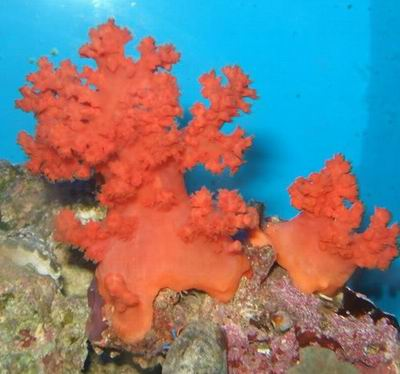 flower tree coral